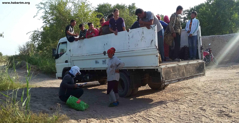 США запретили импорт туркменского хлопка и продукции из него