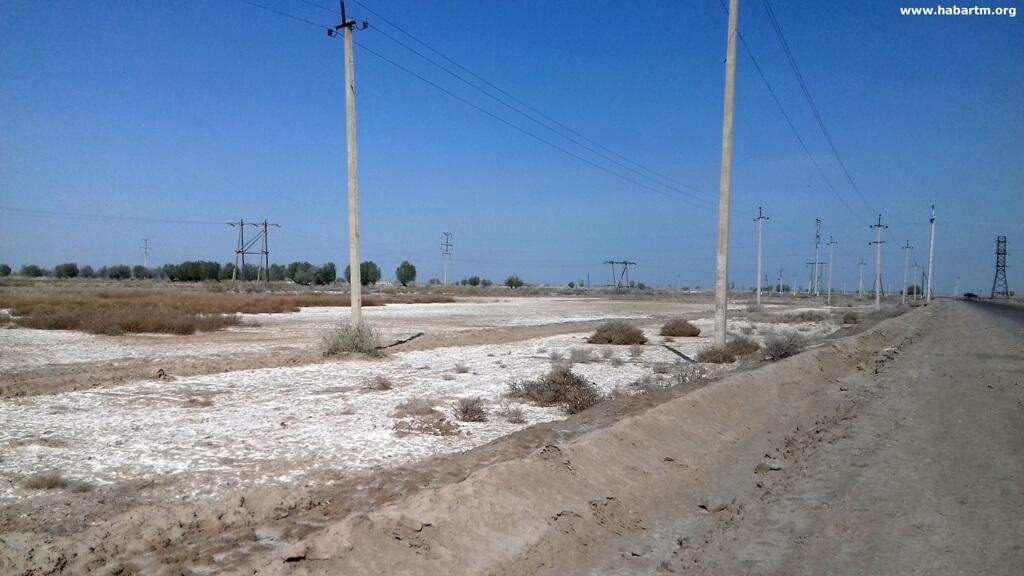 Дефицит муки заставляет власти Туркменистана усилить охрану посевов пшеницы
