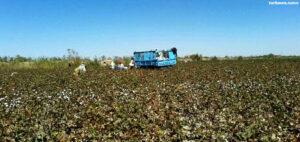 Туркменабад: С учителей продолжают брать деньги за хлопок