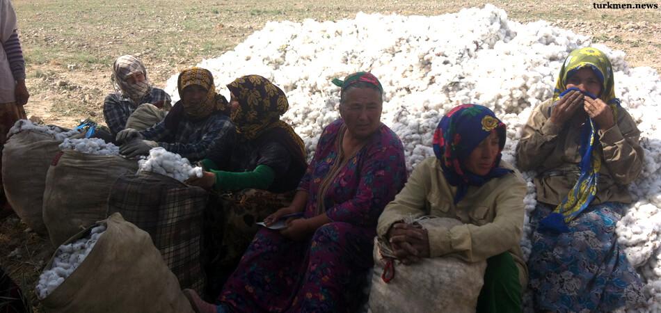 «Груз на осле». Учителей Туркменабада массово выгоняют на хлопок