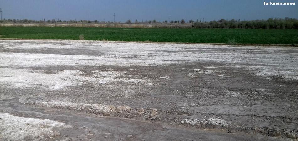 В крупнейшем районе Дашогузского велаята началась комплексная проверка
