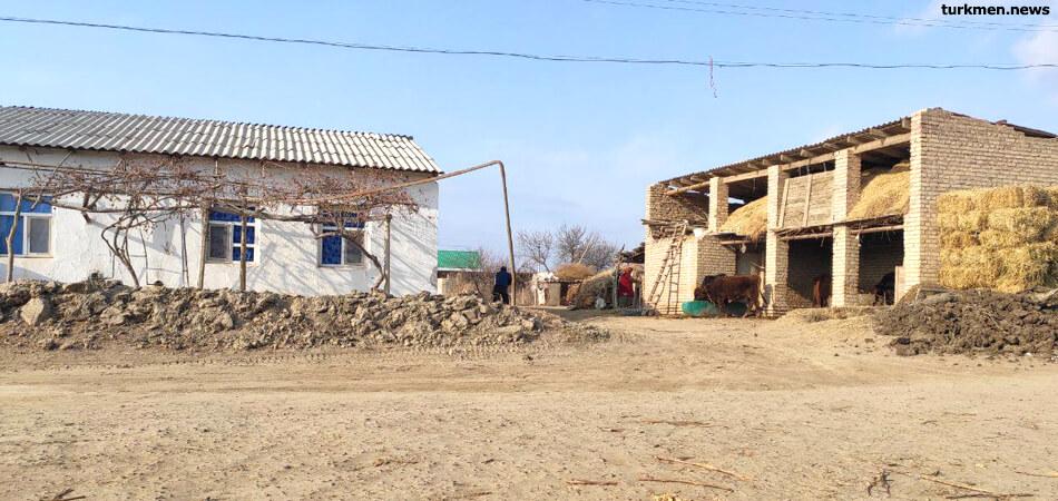 В Туркменистане гибнет скотина. Ветеринары ставят коровам странный диагноз «COVID-12»