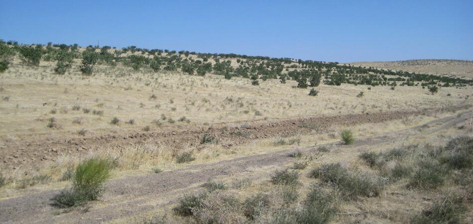 В Серхетабаде по дороге на сбор фисташек погибли солдаты-срочники