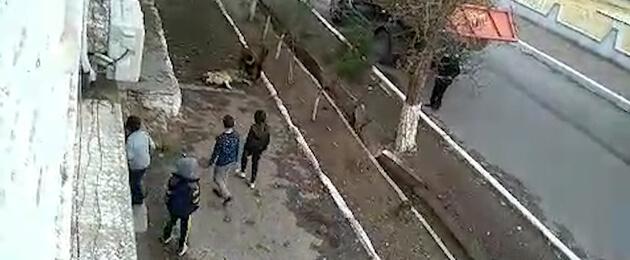 В Ашхабаде устанавливают памятник алабаю, а в Серхетабаде алабаев отстреливают