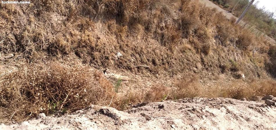 Сельчанам Дашогузского велаята не хватает воды для полива